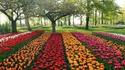 Кукенхоф: Приказните градини с лалета в Холандия