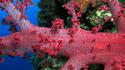 Фото сряда: Изумителният подводен свят на Червено море