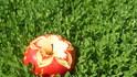 Златната карвинг ябълка на Оратница