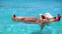 Плуващите прасенца от Бахамските острови