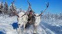 Най-студеното място на света: Оймякон