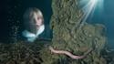 Невероятната история на човешката риба