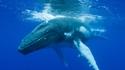 Пътешествие до Нова Зеландия на гърба на кит