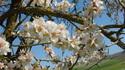 Красивият празник на дърветата Ту Би Шват