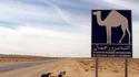 Приключенията на един колоездач в Тунис