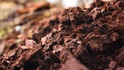 Музеят на шоколада в Мексико - вкусна разходка