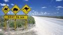 20 шантави факта за Австралия, които не знаете