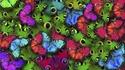 Пеперуден парк отваря врати в Дубай