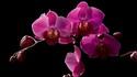 Домът на орхидеите в Сингапур