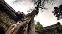 Ангкор, Камбоджа: Храмовете, погълнати от джунглата