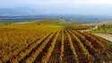 Българските сортове грозде, за които трябва да знаете