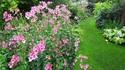 Градината на физиката – растително многообразие в Лондон