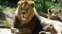 Да пренощуваш с лъвовете в Лондон