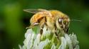 Магистрала за пчели в Осло