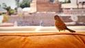 5 неща, които да (не) правите в Маракеш