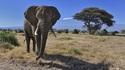 6 неща, които туристите да знаят за Кения