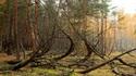 Пияната гора в Русия