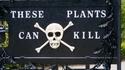 Отровната градина Алнуик – смъртоносната британска атракция