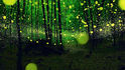 Вижте първия в света парк със светулки