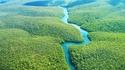 Нов национален парк пази джунглите на Амазония