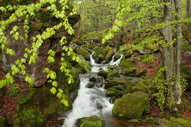 Чипровски водопад и екопътека Деяница
