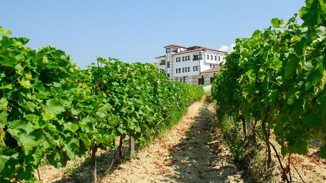 Вила Мелник – да минеш по пътя на виното