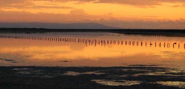 Поморийското езеро – откривай птиците с бинокъл
