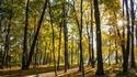 Колко време в парка ви гарантира добро здраве?
