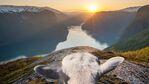 Норвегия взе за екскурзоводи 5 овце – и те са страхотни!