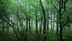 Норвегия е първата страна, която забрани обезлесяването