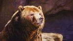 Да срещнеш мечка стръвница... и да оцелееш!