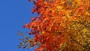 10 причини да очакваме септември с нетърпение (+ 1 бонус)