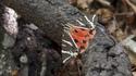 Долината на пеперудите на Родос