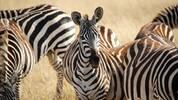 Какво да вземеш на сафари в Африка - списък