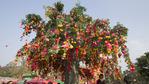 Дървета в Китай сбъдват желания