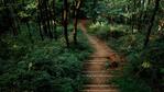 7 удивителни места за горско къпане