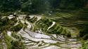 Фото сряда: Оризовите тераси на Банауе