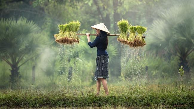 Виетнам: 15 съвета за начинаещи