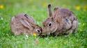 Островът за гушкане на зайчета