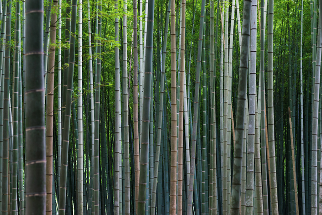 Най-красивите снимки от Киото (галерия)