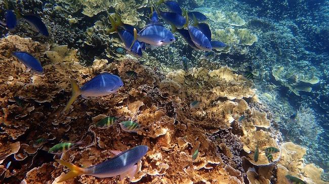 Нямате много време да посетите Големия бариерен риф...