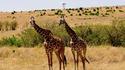 Серенгети - царството на животните