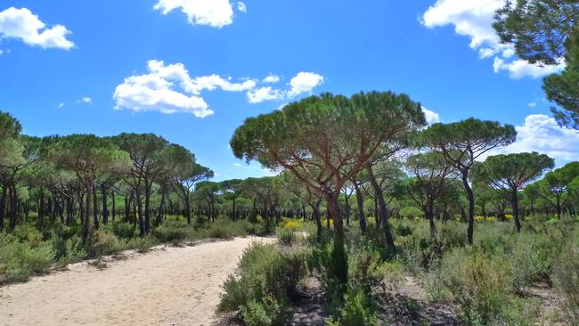 Доняна - застрашеното природно богатство на Испания?