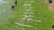 Зелените плажове в Китай