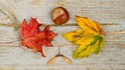 7 причина да обичаме есента