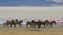 Магади - едно необичайно африканско езеро