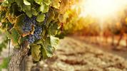Къде да изпиете чаша хубаво вино в България?