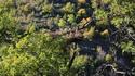 Примамват още черни лешояди в Източните Родопи