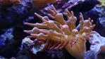 Австралия ще плаща за идеи за спасяване на Големия бариерен риф