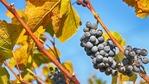 Къде се е произвеждало вино преди повече от 7000 години?